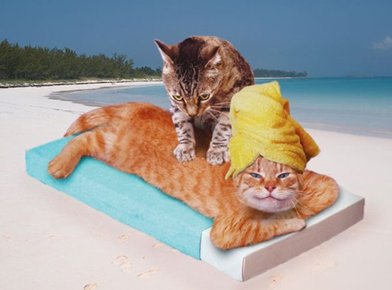 thai-cat-massage-kata-beach