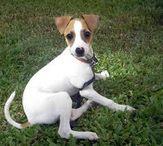 Tippy Greyhound
